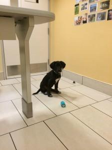 Zorro first visit